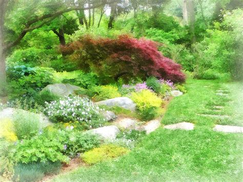 Maple Garden by Garden With Japanese Maple Photograph By Susan Savad