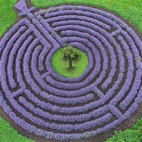 lavender labyrinth 10753 best images about topiary on pinterest see best
