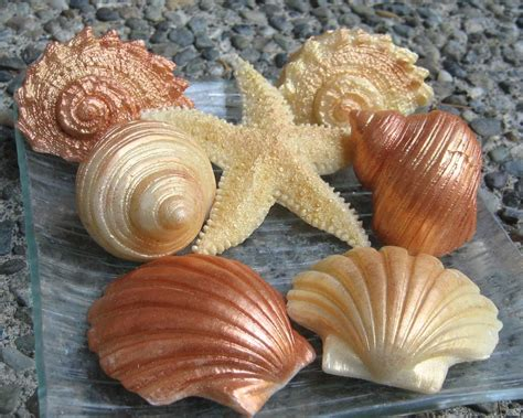 items similar to decorative seashell soaps in gold and