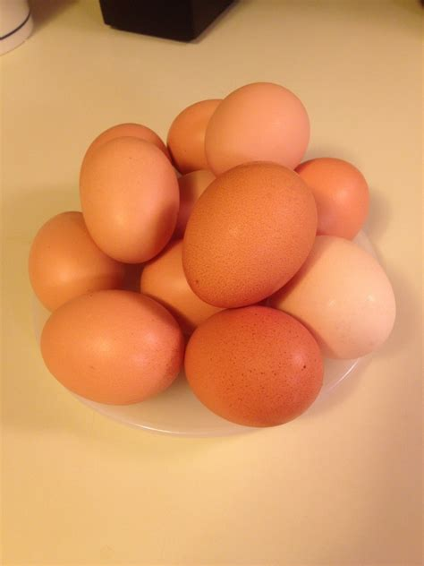 Refrigerated Eggs Shelf by Do Eggs Need To Be Refrigerated And Washed Countryside Network
