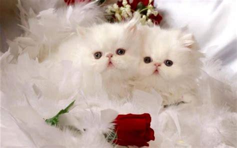 imagenes gatitos hermosos im 225 genes de gatitos con flores bloggergifs