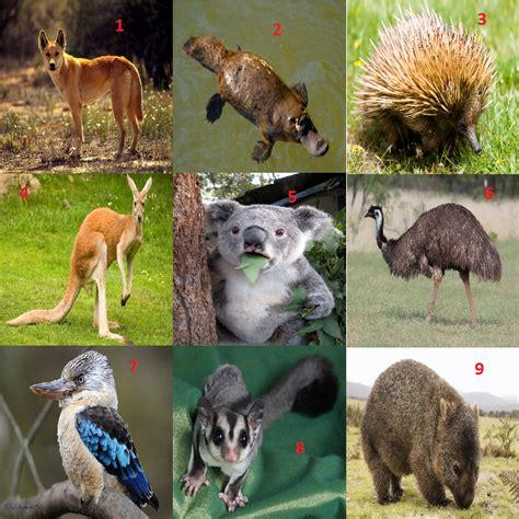 Search Name Australia Australian Animals Names Images