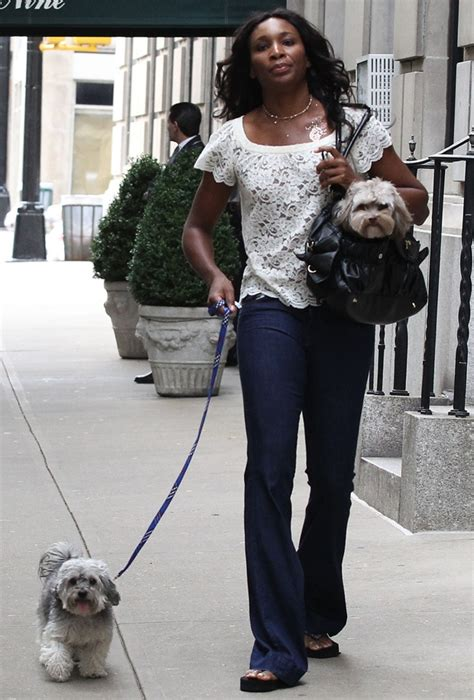 williams dogs 30 best images about w havanese on barbara walters tennis