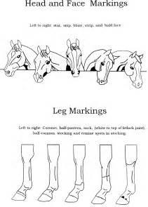 face amp leg markings hand horsemastership glenlyon pony club willow creek pony club