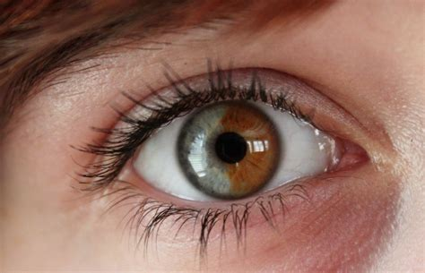 coolest eye colors musely