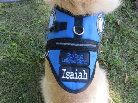 comfort dog vest 35 best images about isaiah comfort dog on pinterest