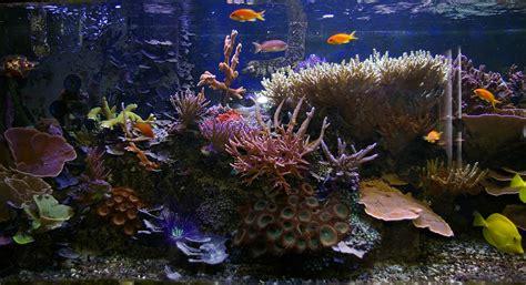 live wallpaper windows 10 fish wallpapersafari