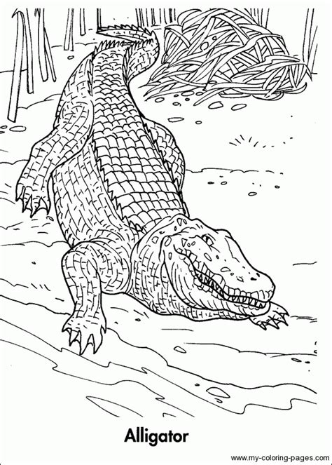 coloring page trendy animal planet coloring pages when