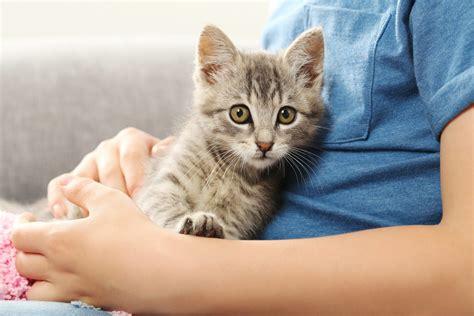 wann ist katze ausgewachsen katzenimpfung wann sollte ich meine katze impfen stories
