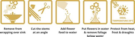 How To Take Care Of Flowers In Vase by Flower Care Guide How To Care For Your Flowers Go