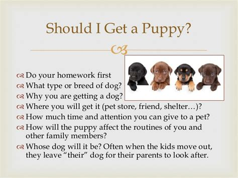 should i get a puppy how to house a puppy