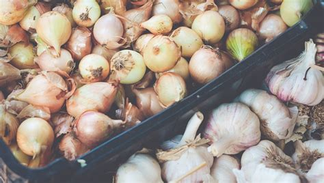 onions bad for dogs 10 foods that are bad for dogs dogtime