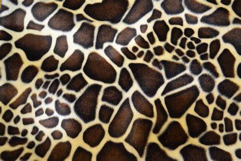 Animal Print by Derby House Fabrics