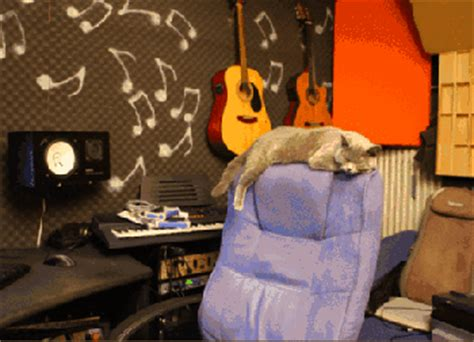 cat on chair gif cat gifs find on giphy