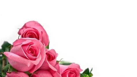 imagenes rosas en hd imagenes rosas hd imagui