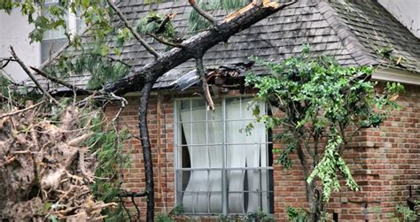 tree fell on house insurance what to do if a tree falls on your house car or fence