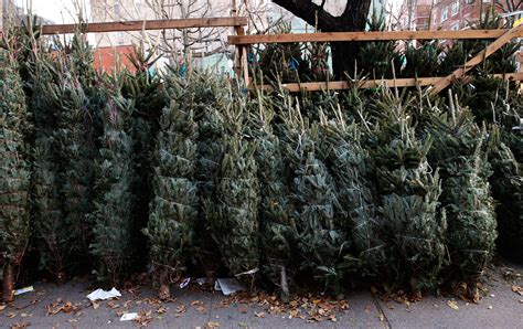 why your christmas tree may cost more this year cbs news