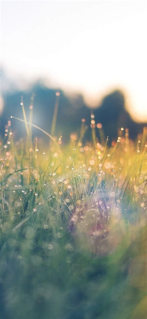 nm lawn green nature sunset light bokeh spring flare