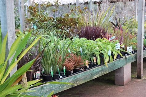 plants planter boxes melbourne pots galore