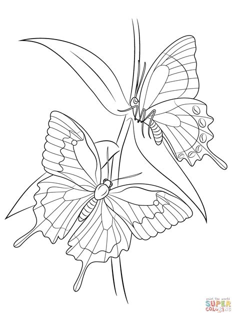 types of butterflies coloring pages ulysses butterflies coloring page free printable