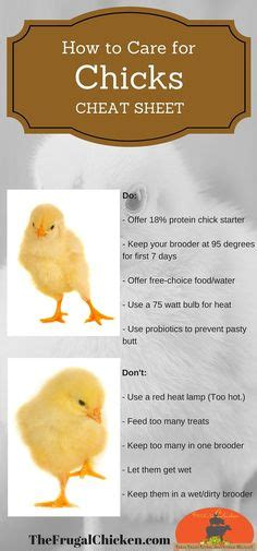 how to take care of backyard chickens natural chicken and to get on pinterest