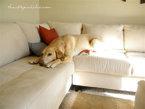 dog off couch thrifty and chic diy projects and home decor