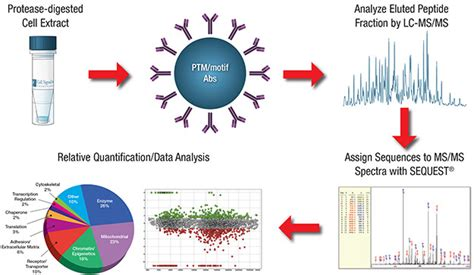 discovery workflow ptmscan 174 discovery proteomic services cst cell signaling