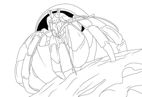 Free Printable Hermit Crab Coloring Pages For Kids Hermit Crab Coloring Pages