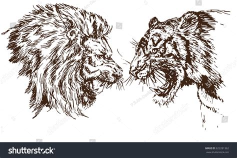 Sketches Antonym by Tiger Growling Opposite Each Other Stock Vector
