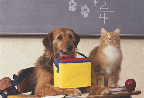 are cats or dogs smarter which are smarter cats or dogs how it works magazine
