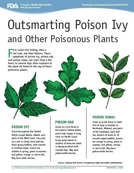 25 best ideas about poison ivy plants on pinterest