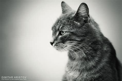 gray cat 54ka photo blog