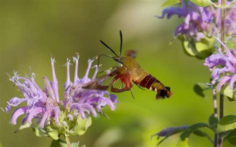 colibr fondos de pantalla 1920x1200 432 colibr 237 y flores purpuras hd 1920x1200 imagenes