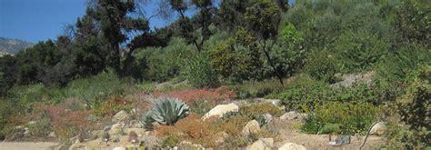 a stewardship triumph at the santa barbara botanic garden