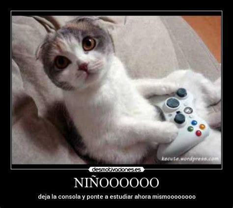 imagenes de gatitos llorando usuario kevin14 desmotivaciones