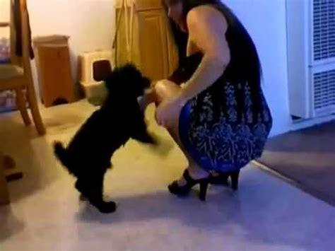 youtube abotonada de perro a una chica un perro se corre encima de una chica a hot dog