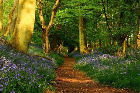 screensaver camino sendero en el bosque 3609