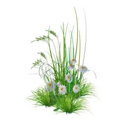 Decorating Home With Plants Gallery For Gt Garden Flowers Png