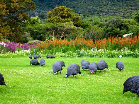 Kirstenbosch Botanical Garden Kirstenbosch Botanical Gardens Fabulous 50 S