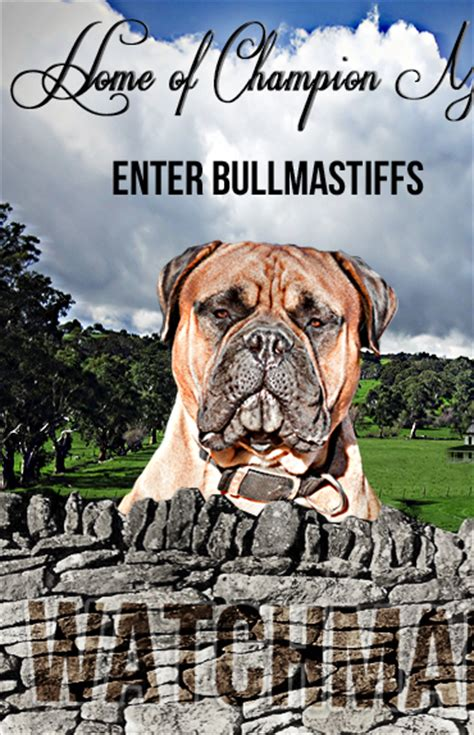 bullmastiff puppies for sale in sc how to house your quickly how to stop a puppy from biting your