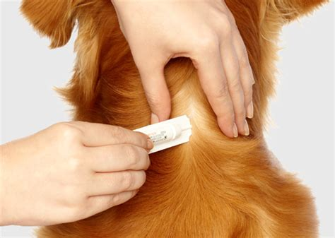 puppy flea medicine flea treatment dogawash mobile grooming