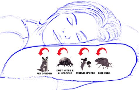 Dust Mites In Pillows by Dust Mite Allergy Pillow Cover Cotton Allergy Australia