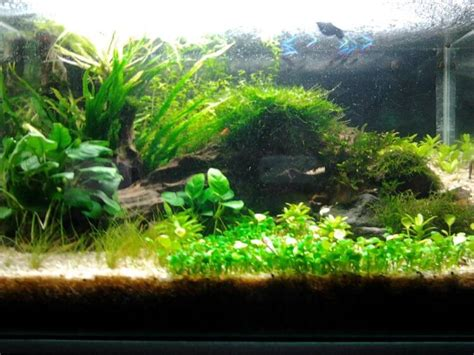 membuat air aquascape jernih cara membuat aquascape di aquarium dengan cara yang mudah