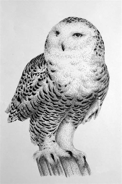 snowy owl drawing by rens ink