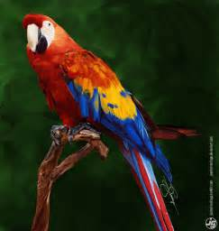 colorful parrots colorful parrot by joemarsantiago on deviantart