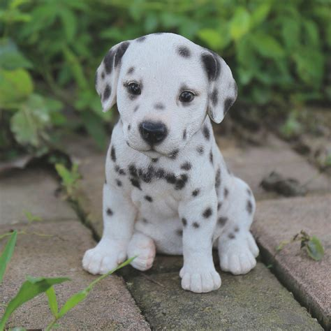 dalmatian pitbull mix puppies for sale 25 clarifications on dalmatian pitbull mix puppies for sale