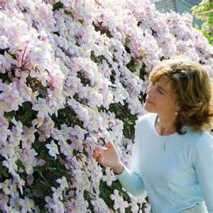 fast growing climbing plants for trellis roses that climb on fence clematis montana mayleen