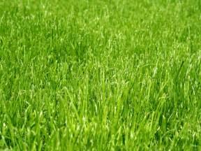 organic grass seed