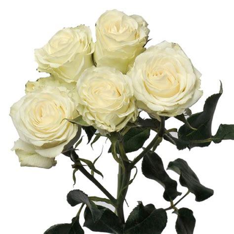 Sprei White spray roses white majolica spray roses