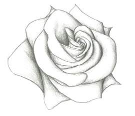 25 easy rose drawing ideas easy draw rose draw roses kawaii